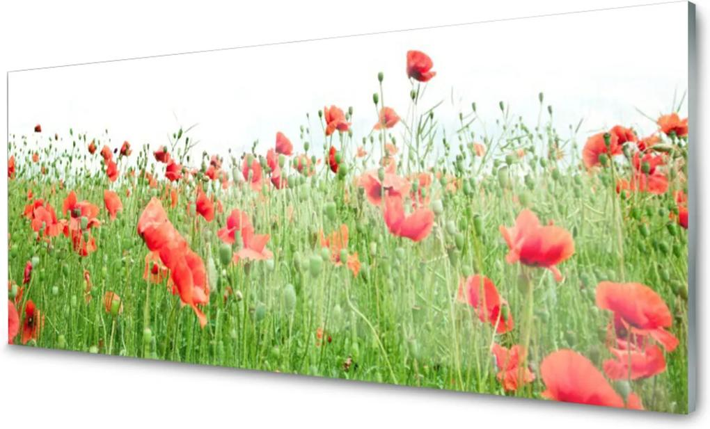 Obraz na skle Maky Rastlina Príroda