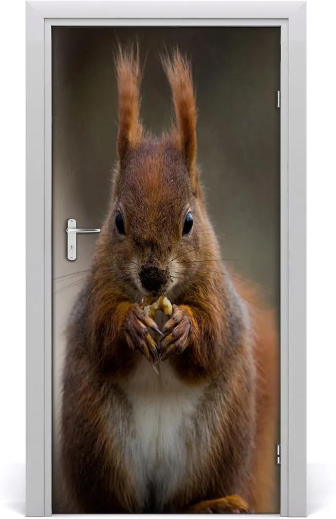 Samolepící fototapeta na dveře Veverka
