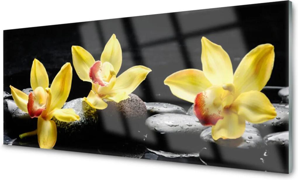 Skleněný obraz Květ kameny rostlina