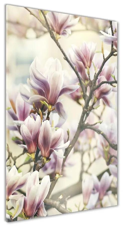 Foto obraz akrylový na stenu Magnolie pl-oa-70x140-f-99199338