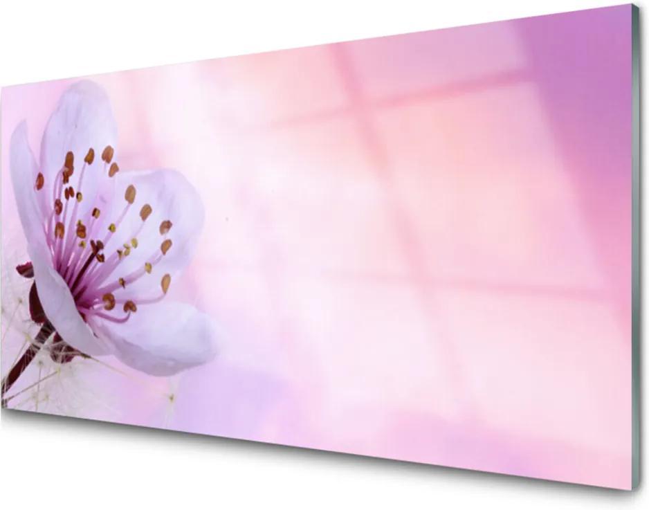 Obraz na akrylátovom skle Kvet Rastlina Príroda