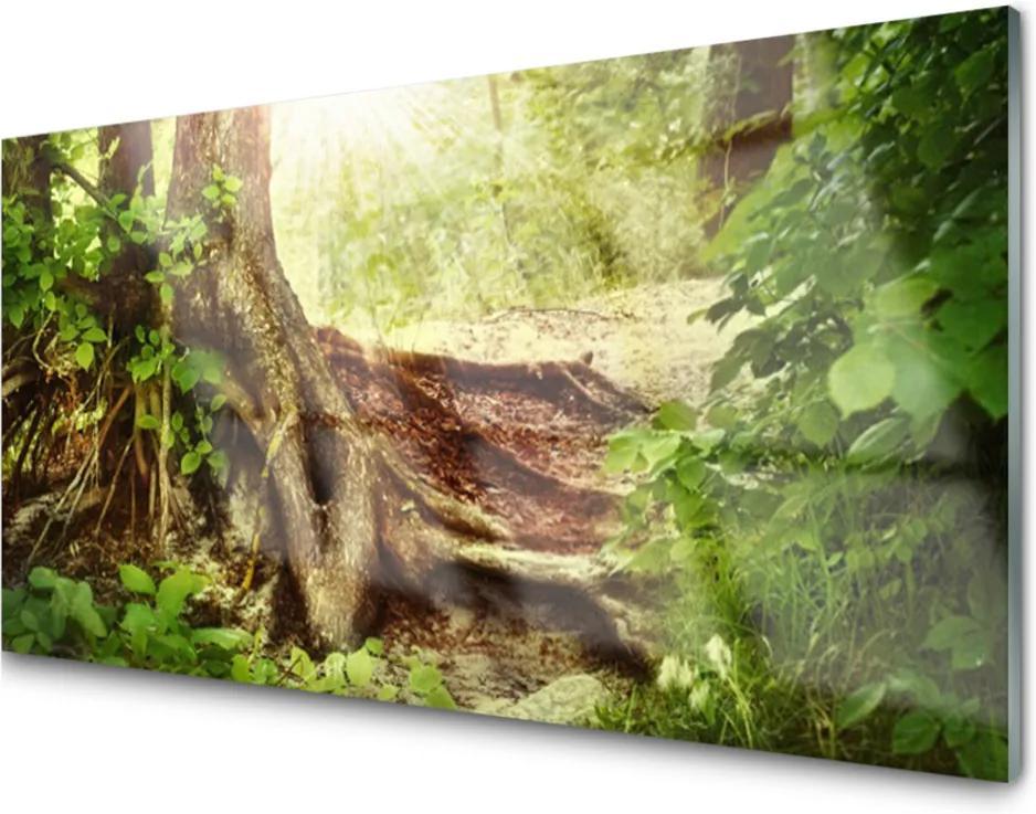 Plexisklo obraz Strom kmen příroda les