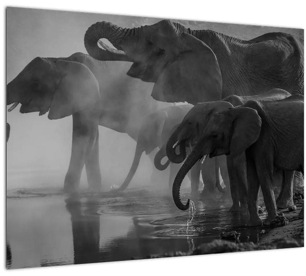 Obraz slonov - čiernobiely (70x50 cm), 40 ďalších rozmerov