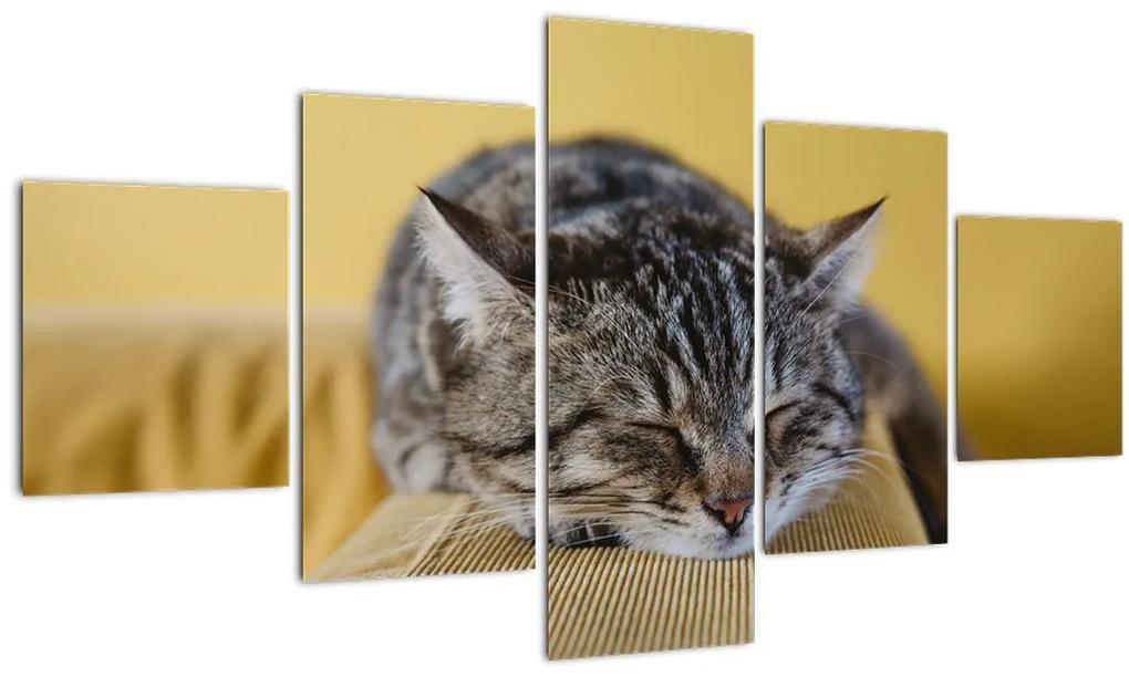 Obraz mačky na pohovke (125x70 cm), 40 ďalších rozmerov