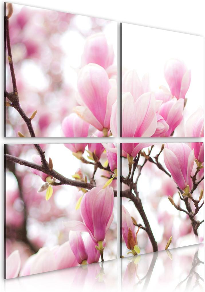 Obraz - Blooming magnolia tree 40x40
