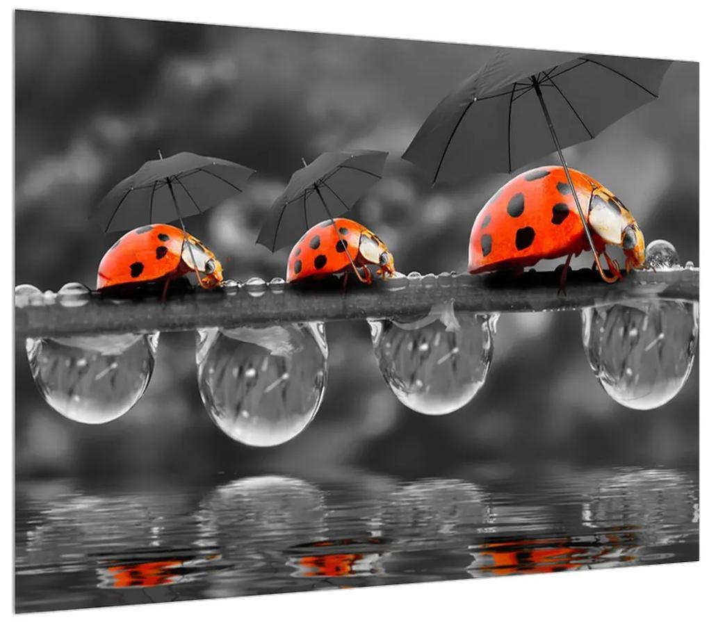 Obraz lienok sedembodkových s dáždnikmi (K012059K7050)