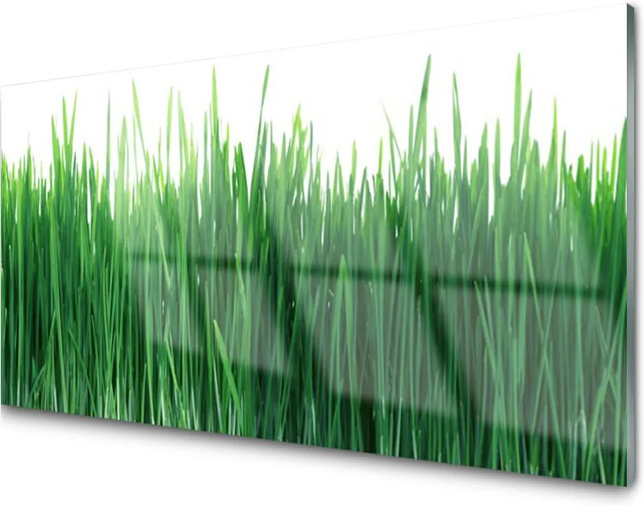 Skleněný obraz Tráva Príroda Rastlina