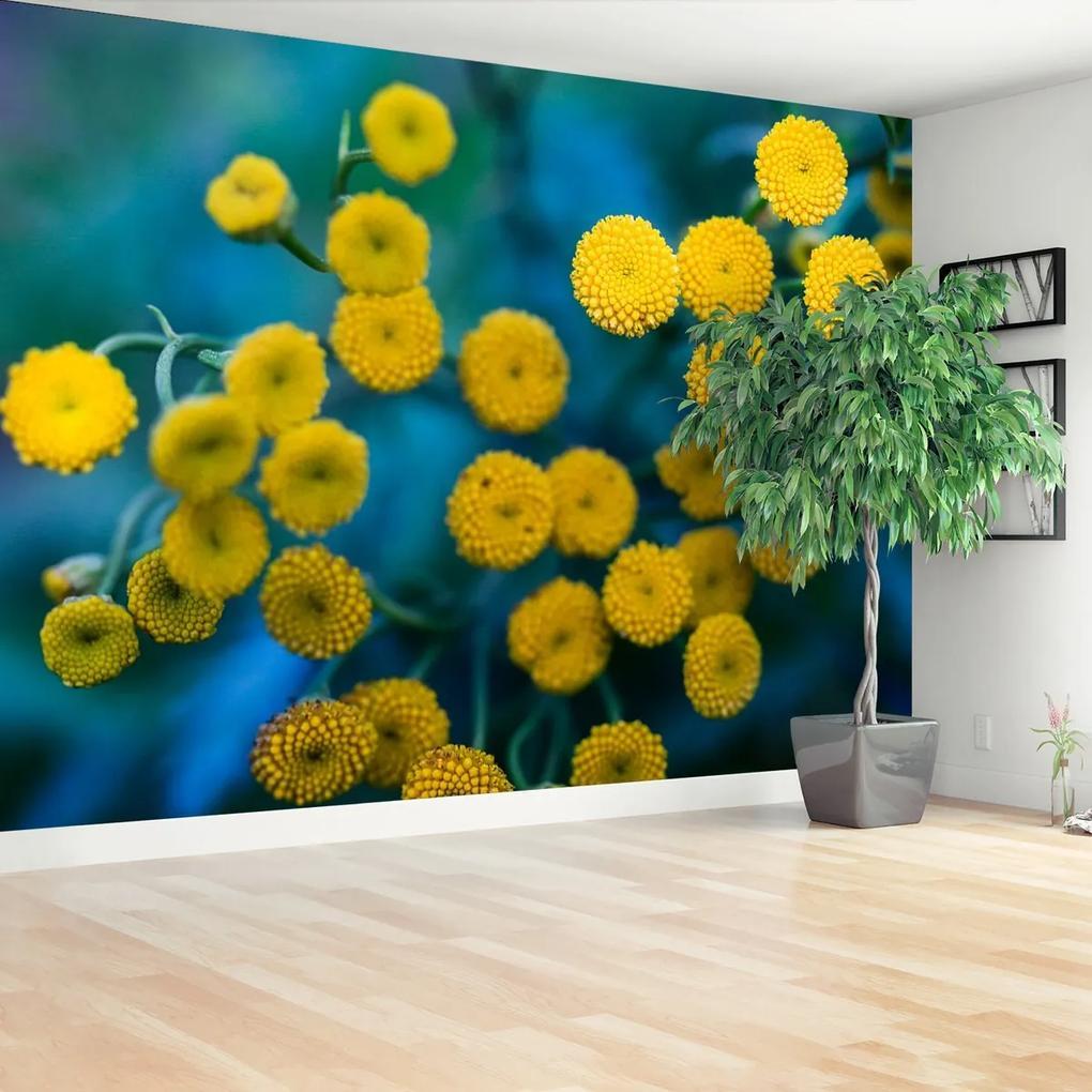Fototapeta Žluté květy