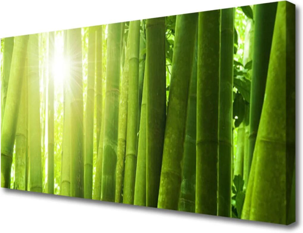 Obraz na plátně Skleněný bambus rostlina