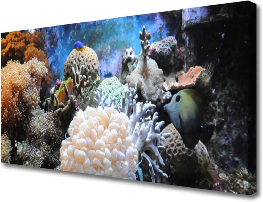 Obraz Canvas Korálový útes příroda
