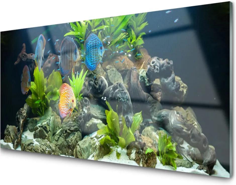 Sklenený obklad Do kuchyne Ryba Kamene Listy Príroda