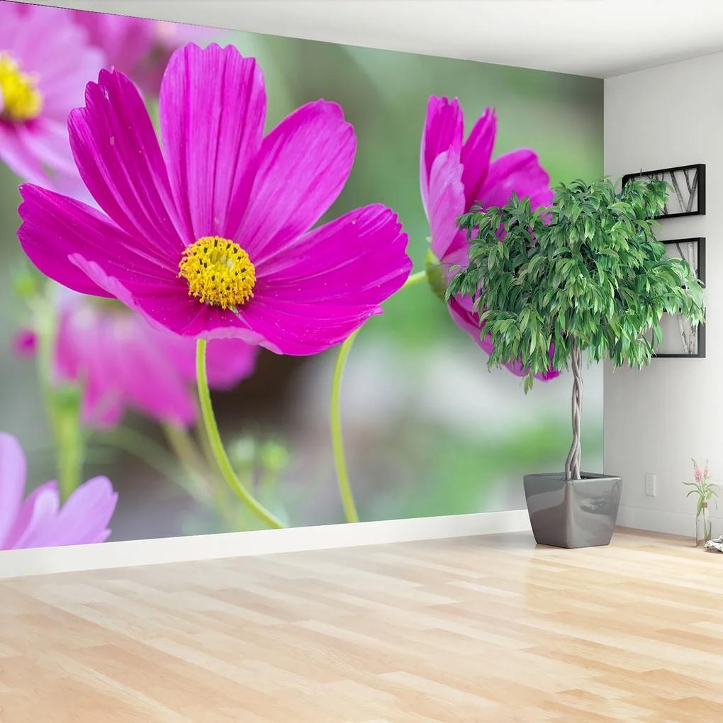 Fototapeta vesmír květiny