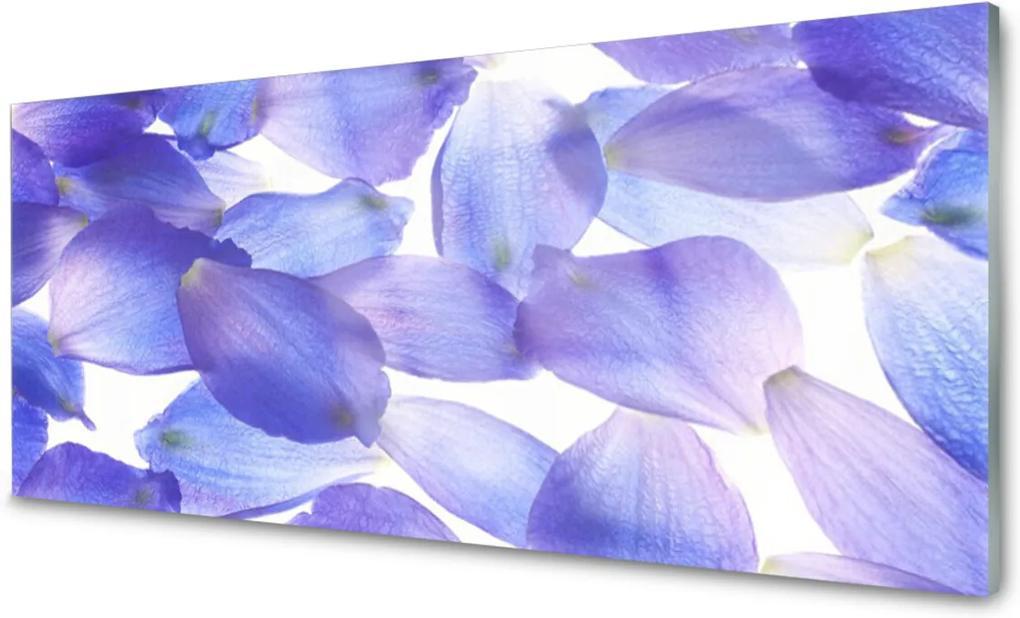Plexisklo obraz Plátky rostlina příroda