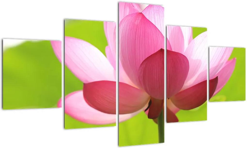 Obraz kvetu Lotusu (125x70 cm), 40 ďalších rozmerov