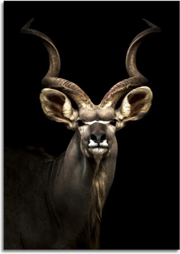 Styler Sklenený obraz - Antelope 70x100 cm