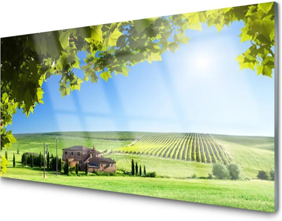Skleněný obraz Pole listy krajina