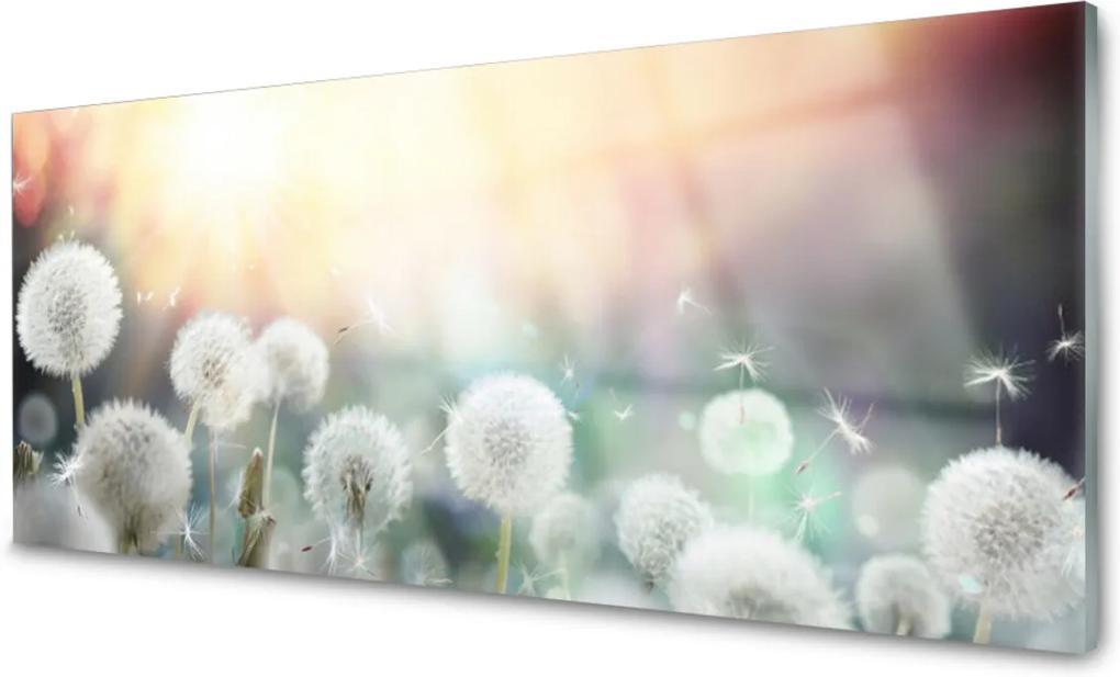 Plexisklo obraz Pampelišky květiny příroda