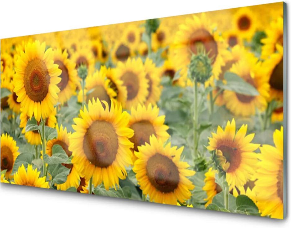 Sklenený obklad Do kuchyne Slnečnica Rastlina Príroda
