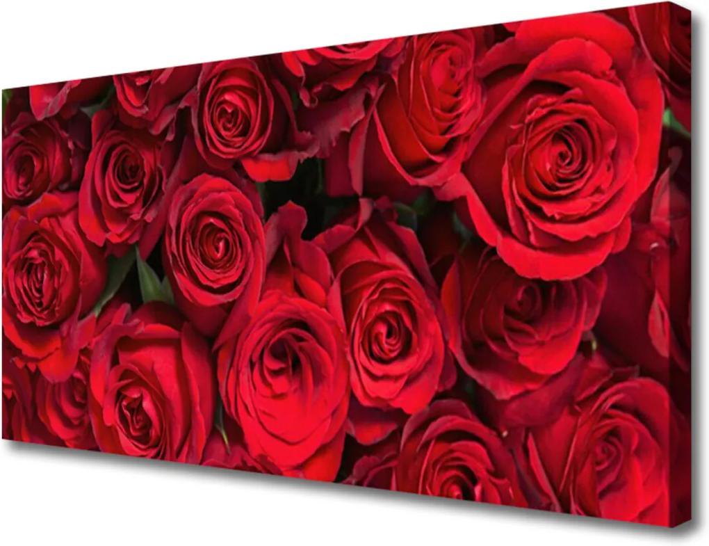 Obraz Canvas Červené Ruže Kvety Príroda