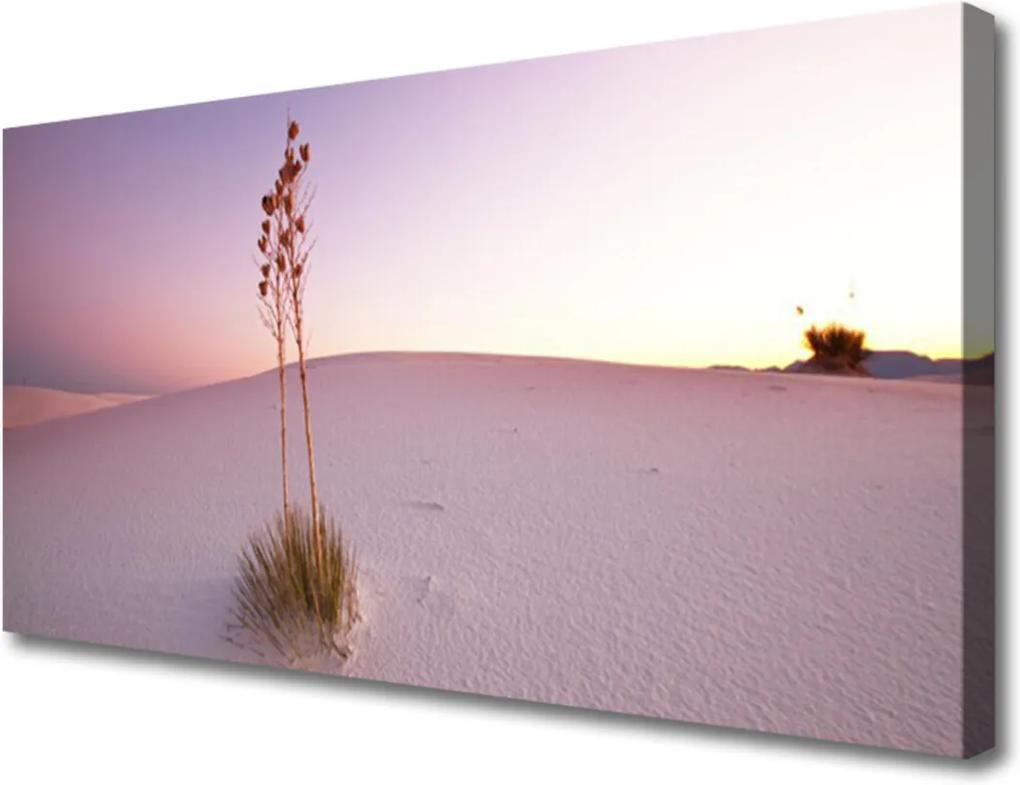 Obraz Canvas Púšť Písek Krajina