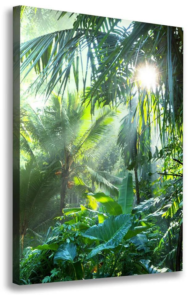 Moderný obraz canvas na ráme Prales pl-oc-70x100-f-58897133