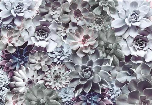 Fototapety, rozmer 368 x 254 cm, Shades, KOMAR 8-962