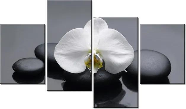 Tlačený obraz Tajomná orchidea 120x70cm 1712A_4Z