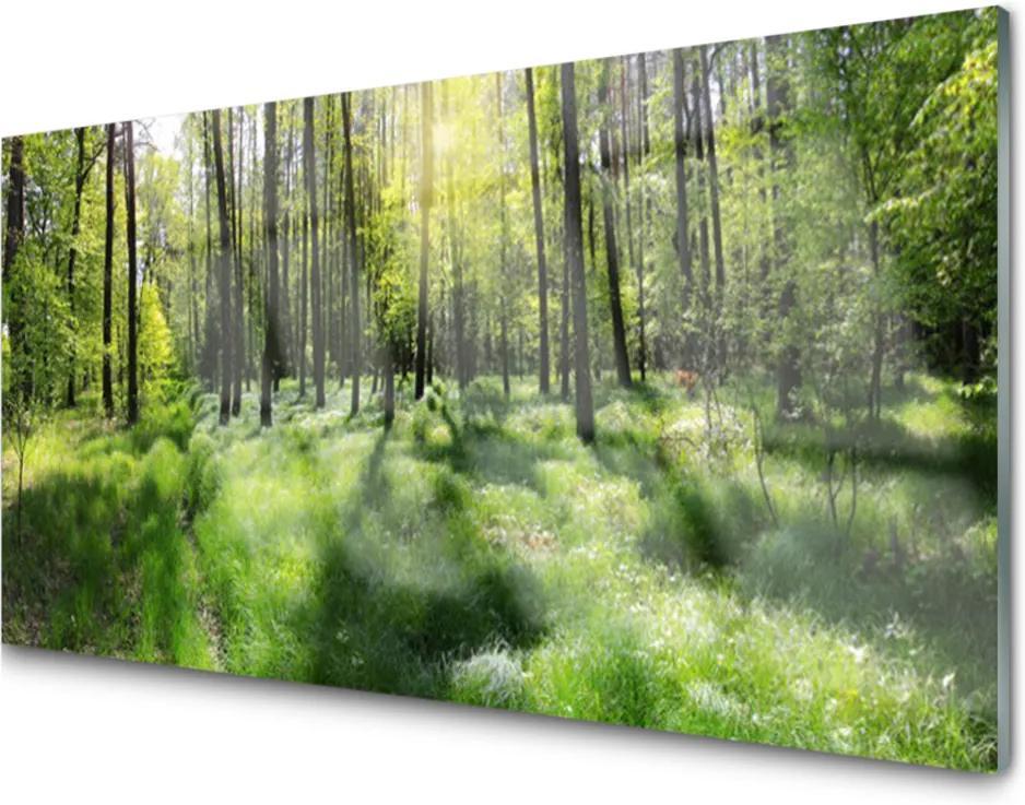 Skleněný obraz Les tráva rostlina příroda
