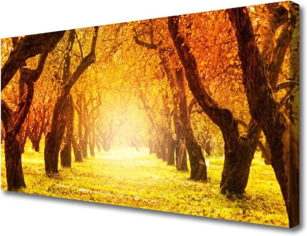 Obraz Canvas Les Chodník Stromy Príroda