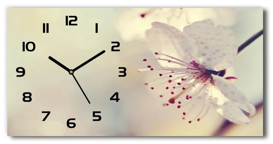 Moderné sklenené hodiny na stenu Kvet višne pl_zsp_60x30_f_102906126
