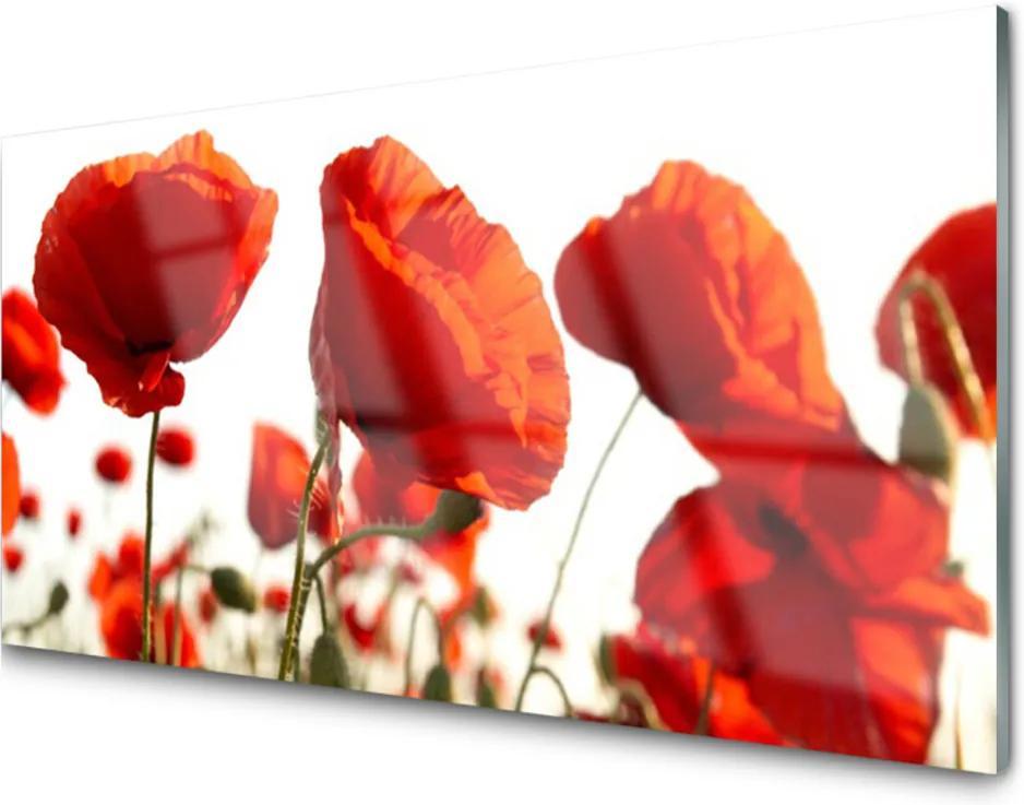 Obraz na akrylátovom skle Maky Rastlina Príroda