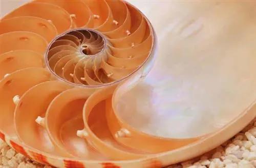 Fototapety, rozmer 184 x 127 cm, National Geographic Nautilus, Komar 1-601
