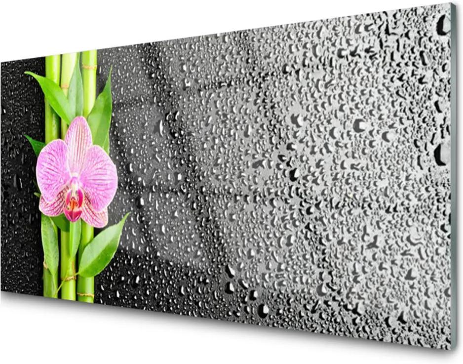 Obraz na skle Bambus Stonky Kvet Rastlina