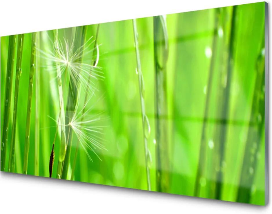 Akrylové obraz Tráva rostlina příroda