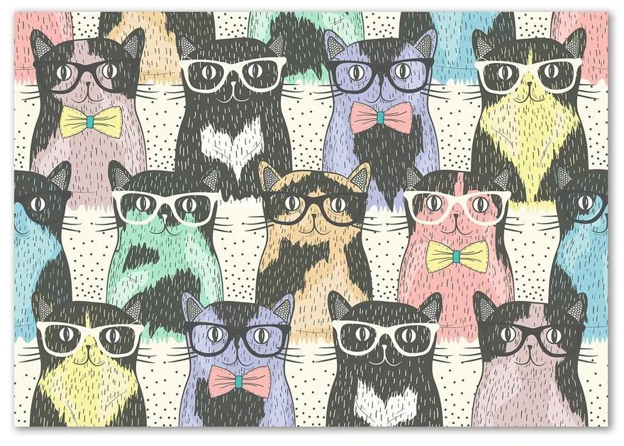 Foto-obraz na skle Mačky v okuliaroch pl-osh-100x70-f-58024892