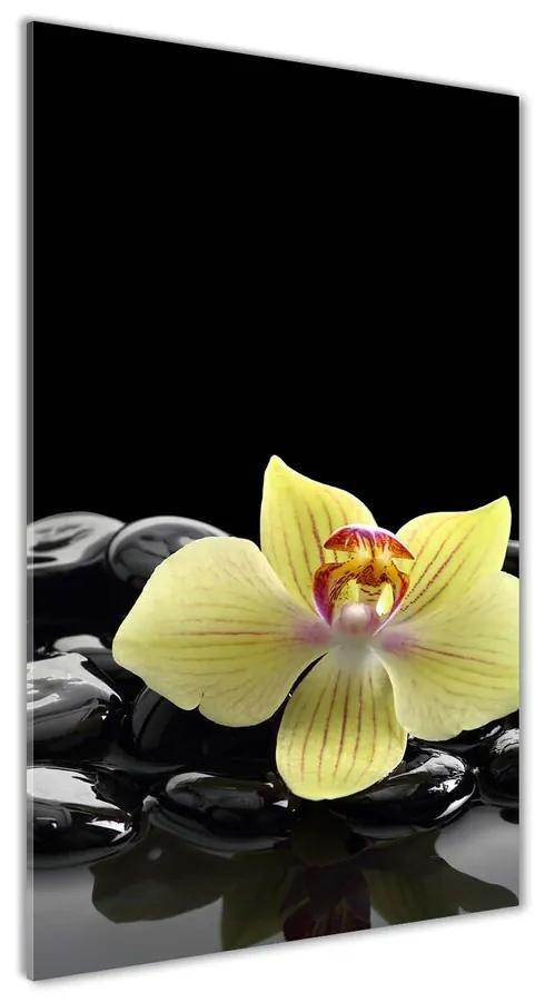Foto obraz akrylový Orchidea a kamene pl-oa-70x140-f-53476359