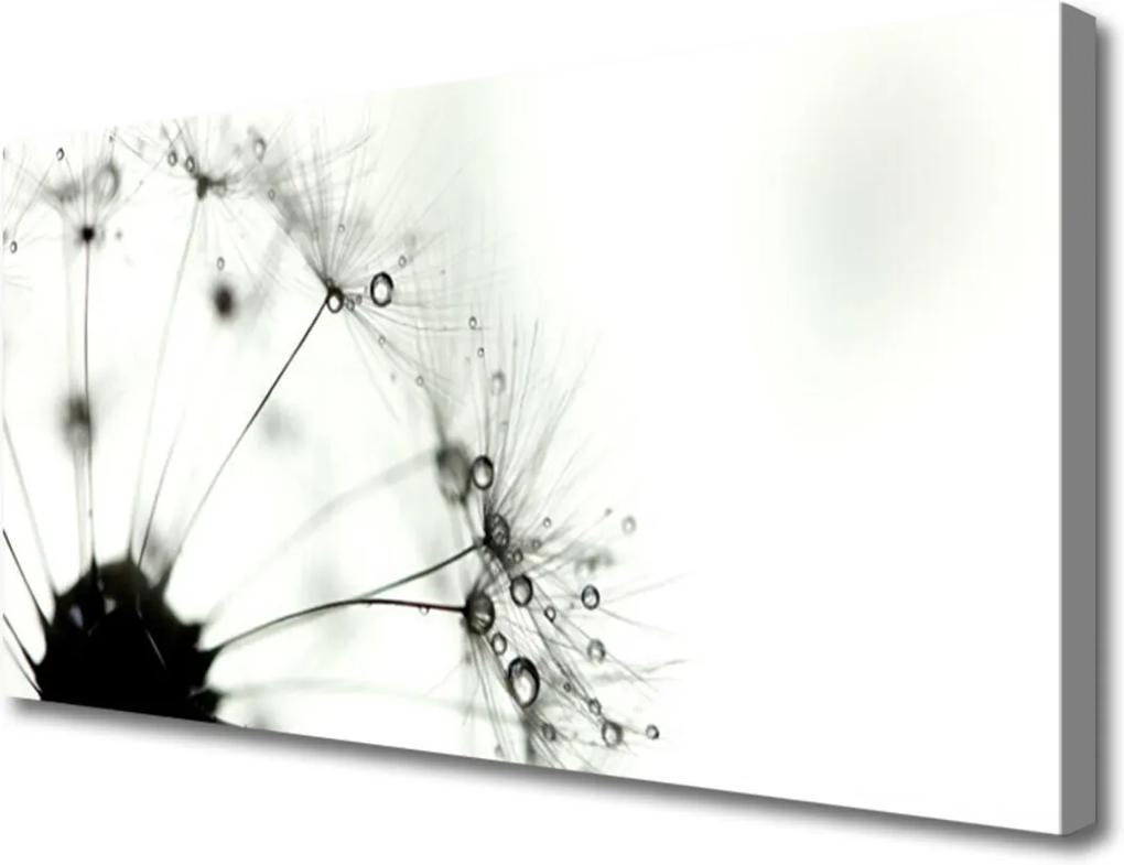 Obraz na plátně púpava Rastlina