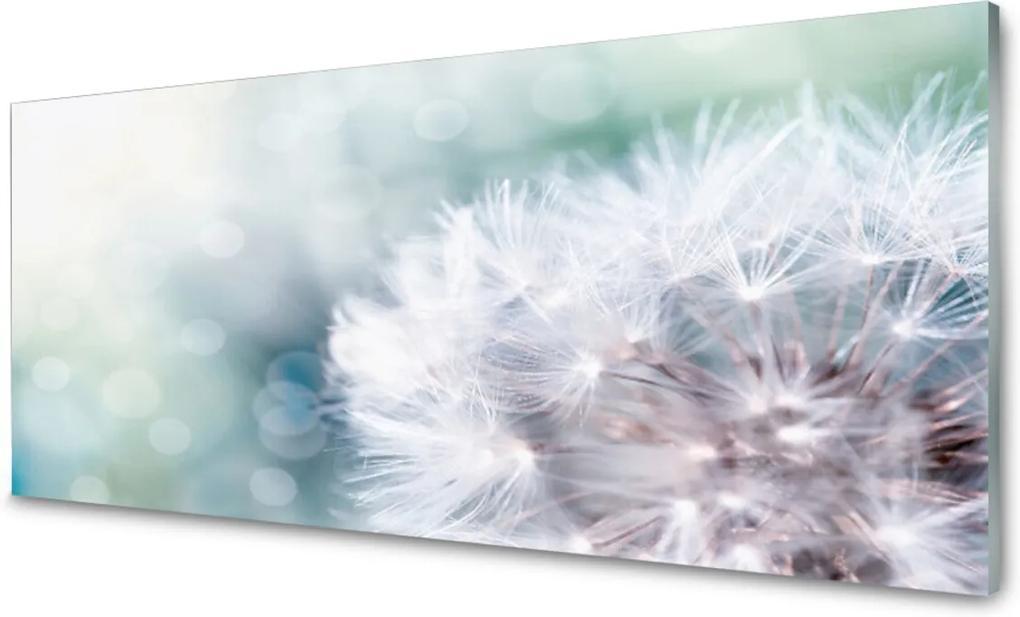 Obraz na skle púpava Rastlina