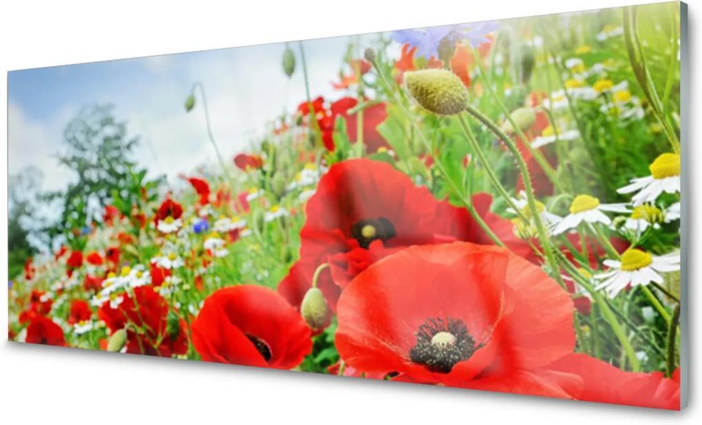 Obraz na skle Sklenený Kvety Príroda