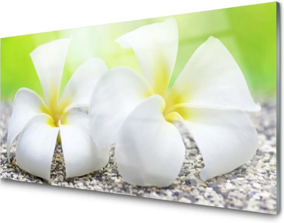 Obraz na akrylátovom skle Kvety Rastlina Príroda