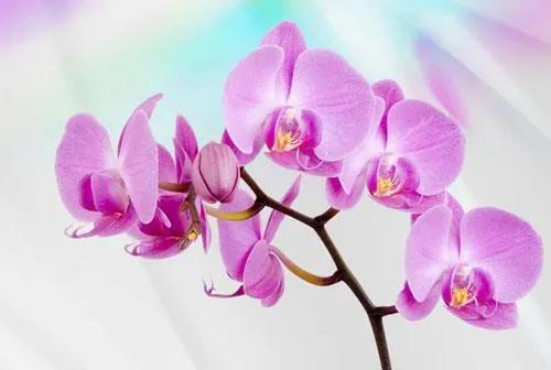 Vliesové fototapety, rozmer 312 x 219 cm, orchidea, IMPOL TRADE 116VE