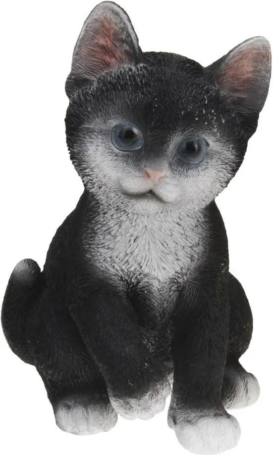Čierna dievča mačička