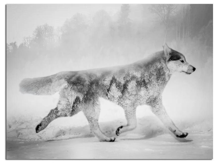 Obraz Styler Canvas Nordic Wolf, 75 × 100 cm