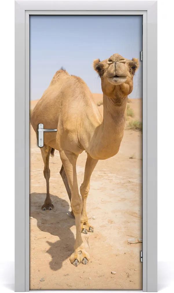 Samolepící fototapeta na dveře Velblou na poušti