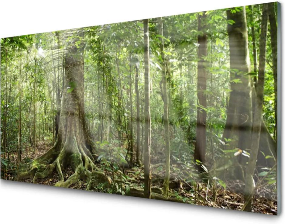 Sklenený obklad Do kuchyne Les Príroda Džungle