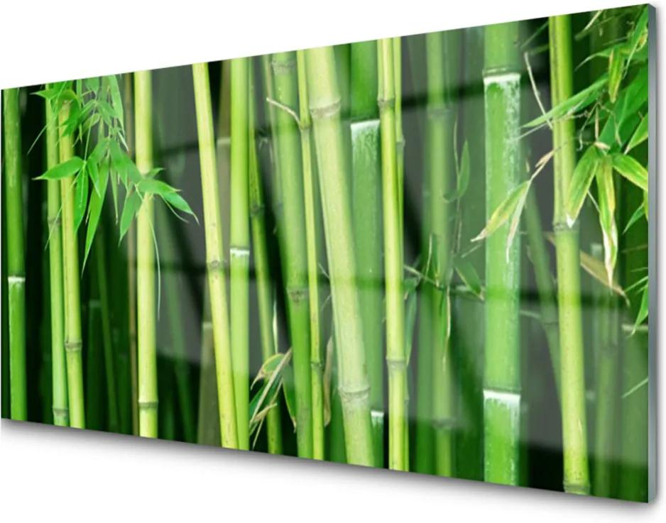 Obraz plexi Bambusový Les Bambus Príroda