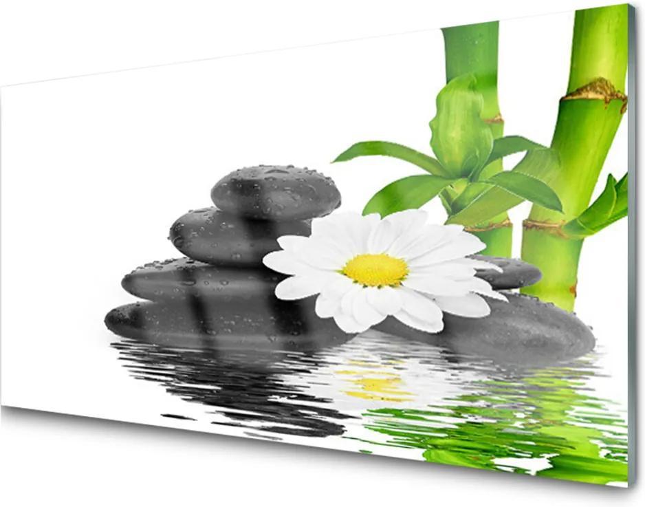 Obraz plexi Kamene Zen Bambus Výhonky
