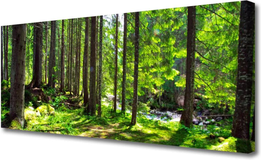 Obraz Canvas Les stromy rostlina příroda