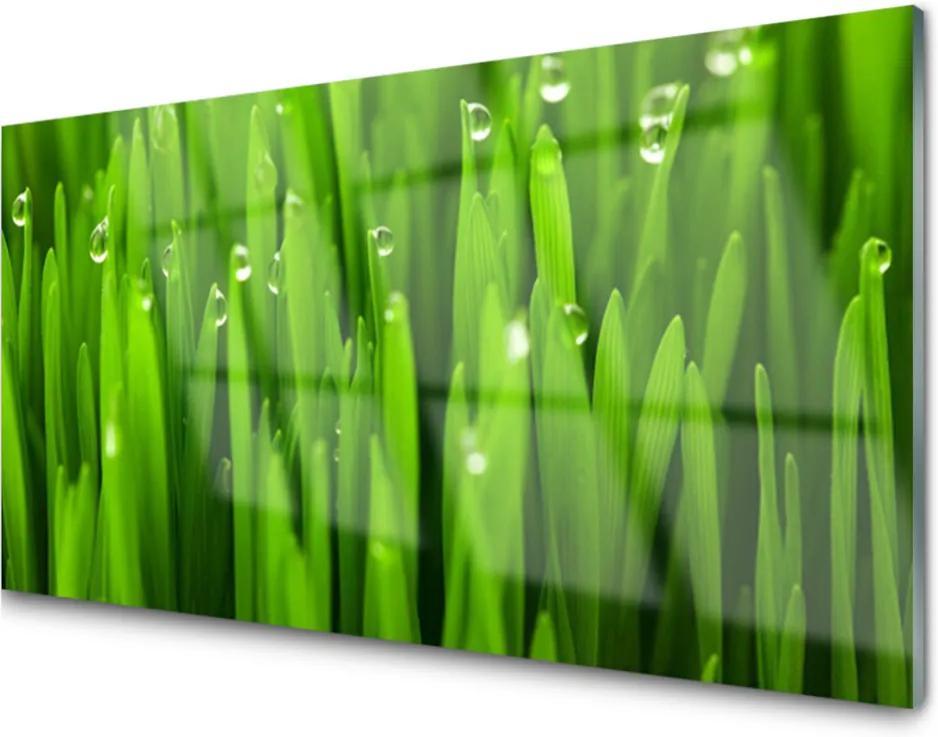 Obraz na akrylátovom skle Tráva Príroda Rastlina