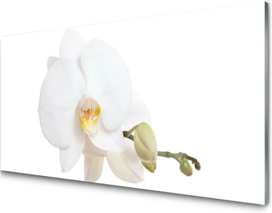 Skleněný obraz Květ rostlina příroda
